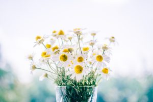 Chamomile As A Powerful Skin Elixir