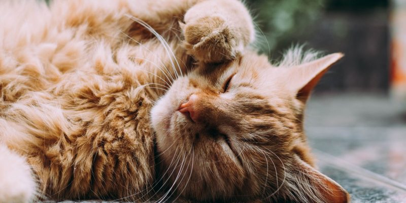 The Best All-Natural Cat Litter For Preventing Litter Feet & Keeping The Floors Clean